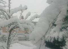 Neige Montmirail 51210 Neige dur branche d arbres
