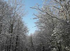Neige Tauxigny 37310 Passage en sous bois