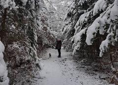 Neige La Neuville-en-Hez 60510 Ballade en forêt