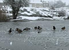 Neige Acheres-la-Foret 77760 Un froid de canard