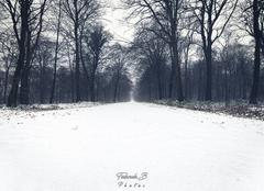 Neige Hesdin 62140 Neige en forêt