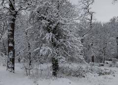 Neige Achères 78260 Achères