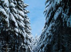 Neige Saint-Nicolas-des-Biefs 03250 Paysage hivernal