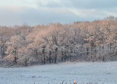 Neige Figeac 46100 Beauté hivernale