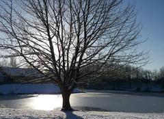 Neige Moissy-Cramayel 77550 Samedi matin à l'étang de Lugny