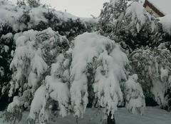 Neige Buchelay 78200 Olivier la neige