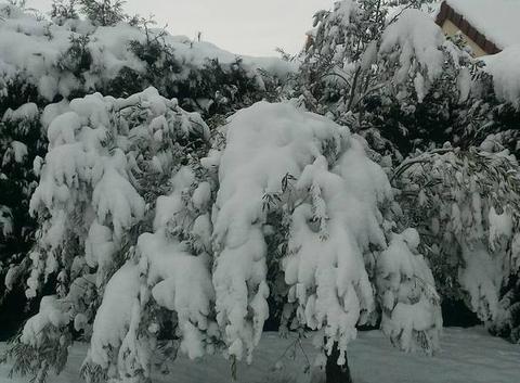Olivier la neige