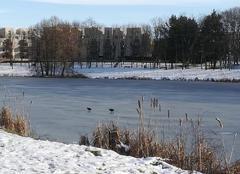 Neige Lognes 77185 Lac gelé