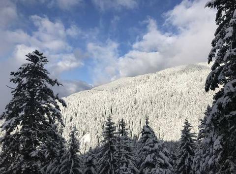 Forêt de neige