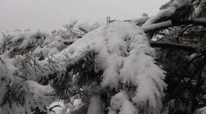 Neige Petersbach 67290 Couche de neige en Alsace.