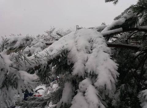 Couche de neige en Alsace.
