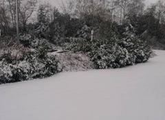 Neige Petersbach 67290 10 cm de neige en Alsace.
