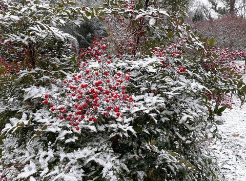 Neige à Manzac