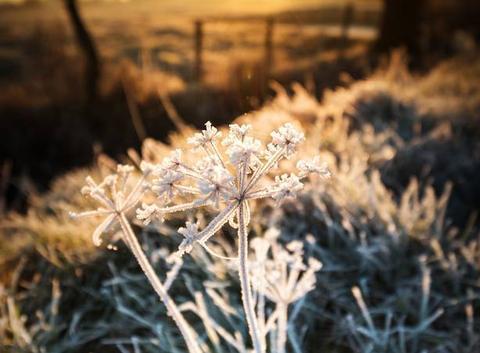 Petite plante gelée