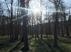 Faune/Flore Aulnay-sur-Mauldre 78126 Soleil d'hiver