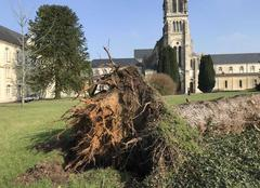 Ciel Soligny-la-Trappe 61380 Chute récente d?un gros arbre, par vent fort à l?Abbaye de La Trappe