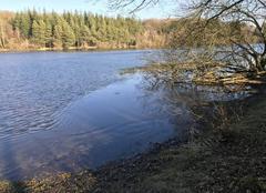 Ciel Soligny-la-Trappe 61380 La surface de l'étang de Chaumont en partie gelée
