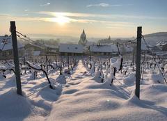 Neige Ville-Dommange 51390 Vignes de champagne