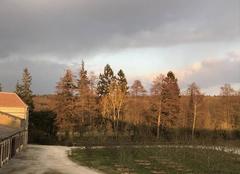 Ciel Soligny-la-Trappe 61380 Contrastes pour un crépuscule glacial et venté sur la forêt du Perche