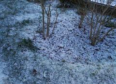 Neige Damery 51480 Il neige !!!