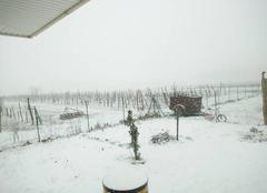 Neige Vic-en-Bigorre 65500 Etoile des neiges