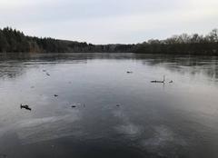 Ciel Soligny-la-Trappe 61380 Le grand étang de Chaumont est entièrement gelé