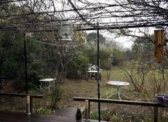Pluie Saint-Genies-de-Comolas 30150 Pluie au jardin