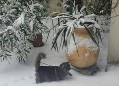 Neige Biarritz 64200 1eres pattes dans la neige