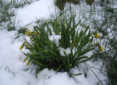 Faune/Flore Rans 39700 Sous la neige...