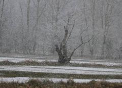 Neige Selestat 67600  neige