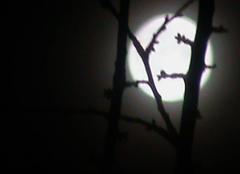 Ciel Beaucourt 90500 La lune dans la brume et au travers  des branches