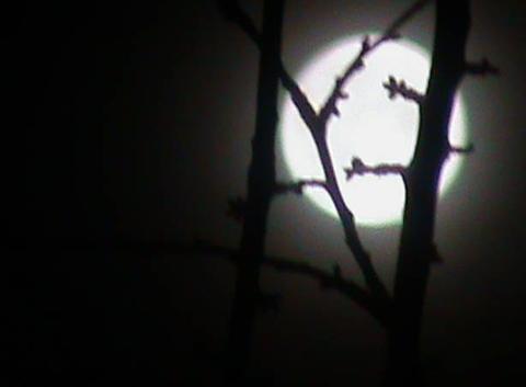 La lune dans la brume et au travers  des branches