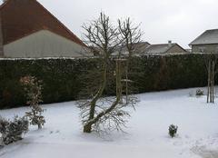 Neige Solgne 57420 Solgne 57 - 2 à 3 cm de neige ce 18 mars 2018