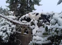 Neige Reims 51100 Neige dans le jardin