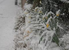 Neige Les Pieux 50340 Neige sur le cotentin