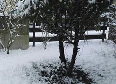 Neige Tomblaine 54510 Dimanche hivernal