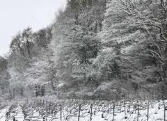 Neige Epernay 51200 La forêt