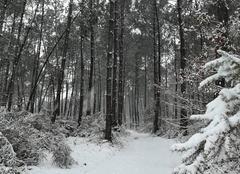 Neige Mees 40990 Mees sous la neige....rare