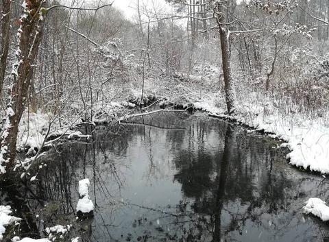 Mees sous la neige