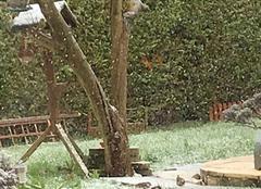 Neige Saint-Georges-des-Coteaux 17810 Sous la neige