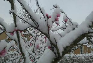 Neige Hermanville-sur-Mer 14880 Le Printemps sous la neige