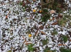 Faune/Flore Roanne 42300 Crocus sous neige