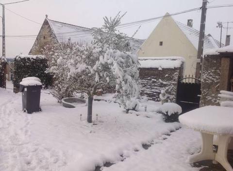 L olivier sous la neige