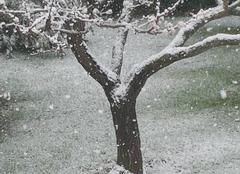 Neige Aubagne 13400 AUBAGNE sous la neige