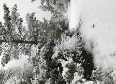 Neige Gemenos 13420 Le printemps
