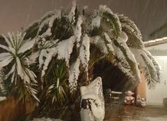 Neige Le Muy 83490 Neige sur palmiers