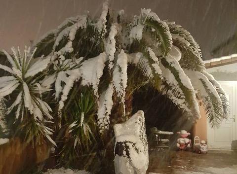 Neige sur palmiers