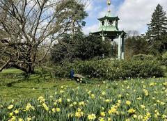 Ciel Paris-16 75016 Début de la floraison des jonquilles à Bagatelle