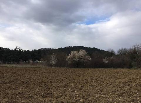 Un bref aperçu du printemps sous une journée glaciale