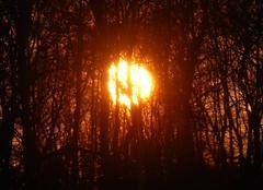 Ciel Dung 25550 Coucher de soleil à travers les arbres